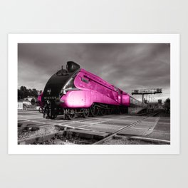 Pink Bittern  Art Print