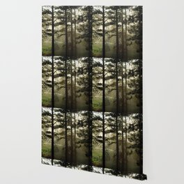 Sunrise Shroud Pine Forest Wallpaper