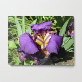 Flower pic 7 Metal Print