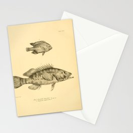 The Zoology of the Voyage of HMS Beagle 1840 - Fish 9: Prionodes fasciatus & Stegastes imbricatus Stationery Cards