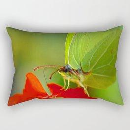 Brimstone Butterfly 45 Rectangular Pillow