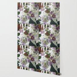 Longwood Gardens Orchid Extravaganza 75 Wallpaper