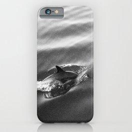 dolphin dazed ocean iPhone Case