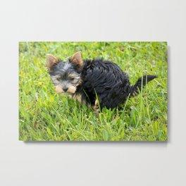 pooping puppy Metal Print