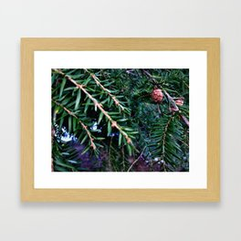 Mini Acorns Framed Art Print
