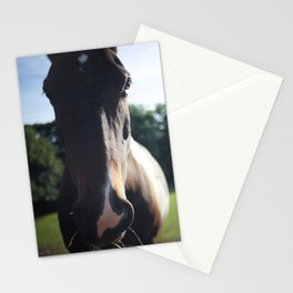 """""""Munchy"""" the Horse Stationery Cards"""
