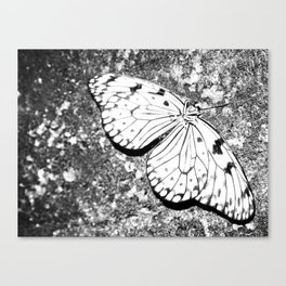 Dead Butterfly Hold Pure Beauty  Canvas Print