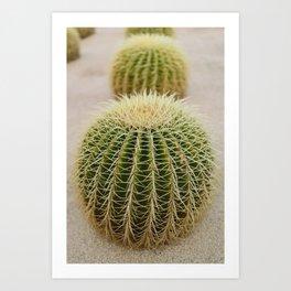 Cabo Cactus IV Art Print