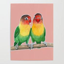 Fischer's lovebirds Poster