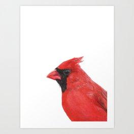 Northern Cardinal portrait Art Print