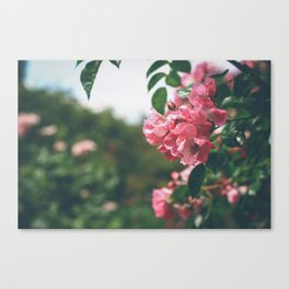 Flower XVIII Canvas Print