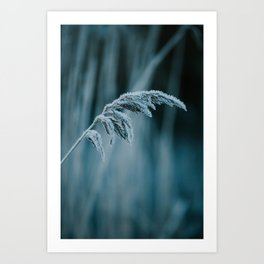 Frosted Grass II Art Print