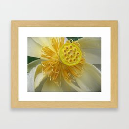 Bloom Where You Are Planted Framed Art Print