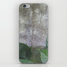 Urban Plant hydrangea leaves on concrete wall iPhone Skin