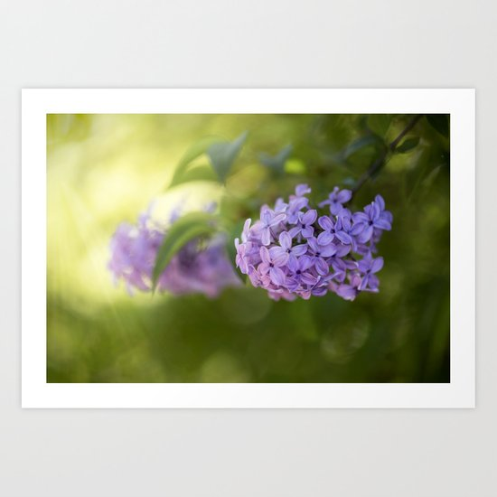 Lilac syringa in LOVE - Spring Tree Flower photography Art Print