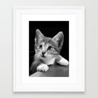 kitten Framed Art Prints featuring Kitten by Julie Hoddinott