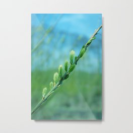 willow catkin Metal Print