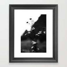 Winter Blooms Framed Art Print