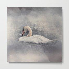 Swan Storm - Wildlife Metal Print
