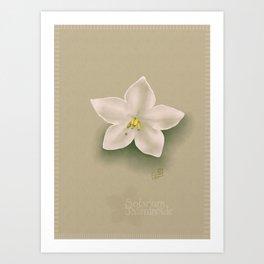 Solanum Jasminoides Art Print
