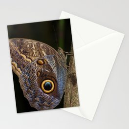 Owl butterfly in Costa Rica - Tropical moth Stationery Cards