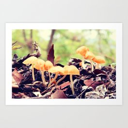 Toadstools in the Rain Art Print