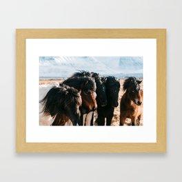 Horses in Iceland - Wildlife animals Framed Art Print