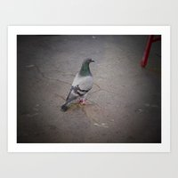 pigeon Art Prints featuring Pigeon by blu leaf