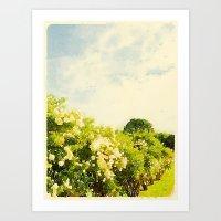 Hydrangea Bushes, Kennebunkport, Maine Art Print