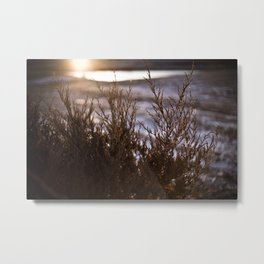 Winter Warm Metal Print