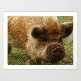 March of the Ginger Pig Art Print