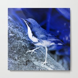 babbler bird blue photochrom tinted aesthetic botanical art altered photography Metal Print