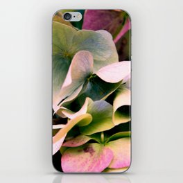 pink and green hydrangea iPhone Skin