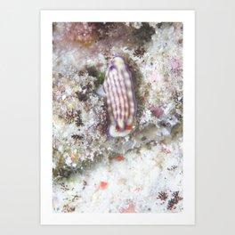 The delightful Maridad hypselodoris Art Print