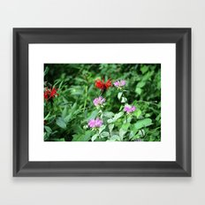Bee Balm Framed Art Print