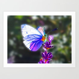Butterfly on the Lavender Art Print
