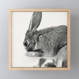 Rabbit Animal Photography Framed Mini Art Print