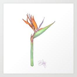 Birds of Paradise flower, Strelitzia Reginea. Art Print