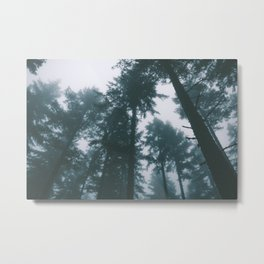 Forest XIII Metal Print