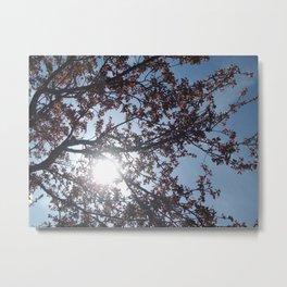 Sun Between Branches Metal Print
