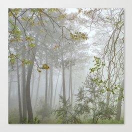 Dream forest. Sierras de Cazorla, Segura y Las Villas Natural Park. Square Canvas Print