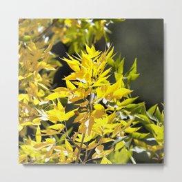 Watercolor Tree, Part, Ash 01, Estes Park, Colorado, Autumn Splendor Metal Print
