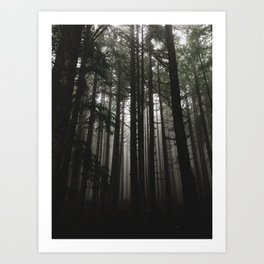 Foggy Trees, Larch Mountain, OR Art Print
