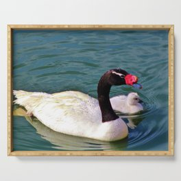 Black-Necked Swan With Baby Serving Tray