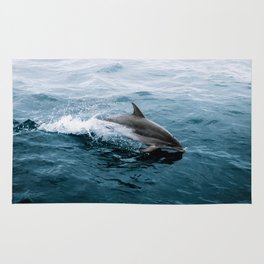 Dolphin in the Atlantic Ocean - Wildlife Photography Rug