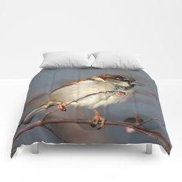 Sparrow  Comforters