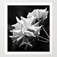 Black & White Roses Art Print