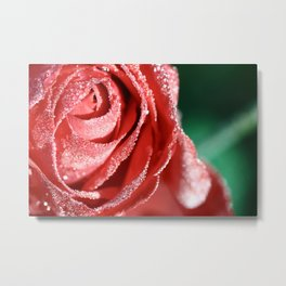 Rose bud with morning dew water Metal Print