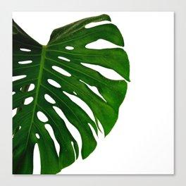 Banana Leaf (Color) Canvas Print