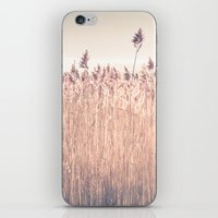 cape cod iPhone & iPod Skins featuring Cape Cod Salt Marsh by ELIZABETH THOMAS Photography of Cape Cod